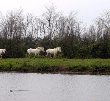 Il Parco regionale del Delta del Pò