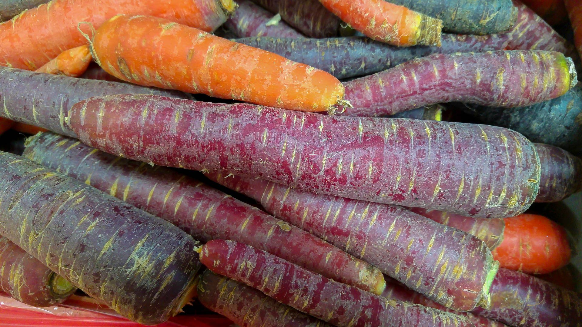 Le carote di San Vito